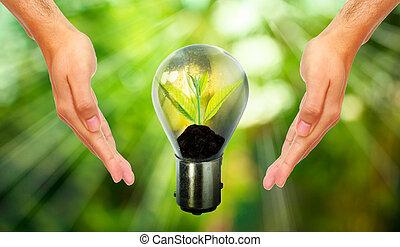 新鮮, 綠色, 小, 植物, 在, 燈泡, 由于, 被模糊不清, 綠色