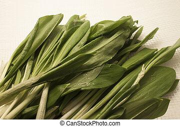 新鮮, 離開, 綠色, 萵苣