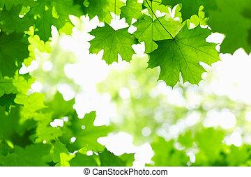 新鲜, 绿色, leaves.