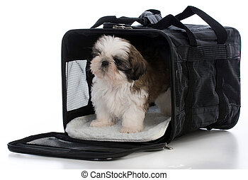 旅行, 運搬人, 子犬