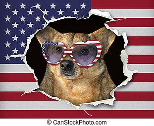 旗, ガラス, 犬, 私達, の後ろ