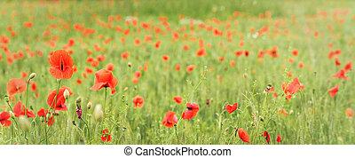 旗, ケシ, 小麦, 緑, 野生, パノラマ, 赤, 広く, フィールド, 成長する