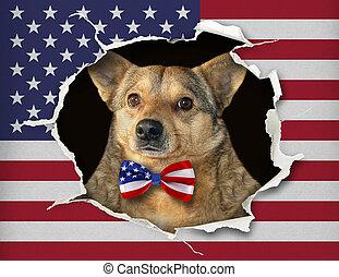旗, 私達, 犬, の後ろ, タイ, 弓