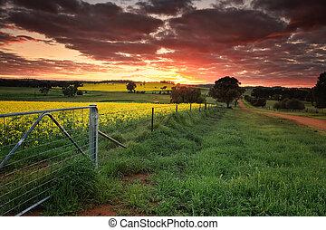 日の出, オーストラリア, 農地