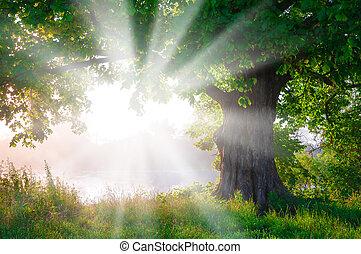 日の出, 上に, 古い, 孤独, 木