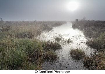 日の出, 泥地, 上に, 霧が濃い