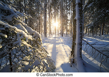 日光, 森林, 冬