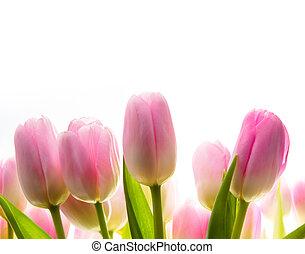 日光, 芸術, 春, チューリップ, 花