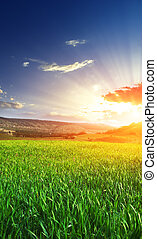 日出, 在中, grean, 草地