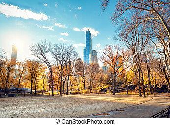 日当たりが良い, 公園, 秋, 中央である, 日