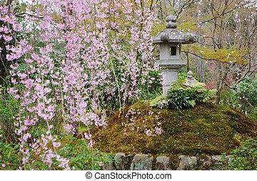 日本の庭, sakura