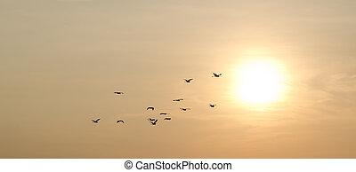 日没の 空, 鳥
