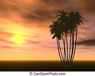 日没, そして, ヤシの木