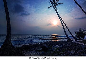 日没, ∥において∥, 熱帯 浜