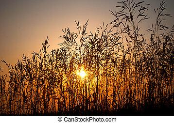 日没, によって, 草