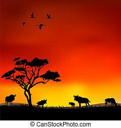 日没, アフリカ