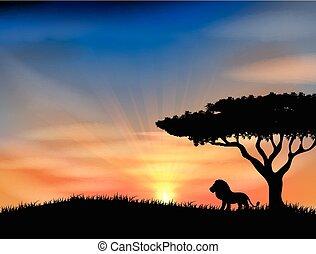 日没, アフリカ, 動物
