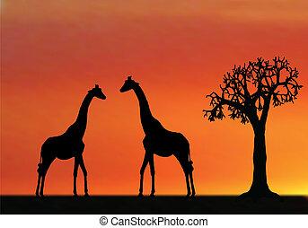 日没, アフリカ, illustraion, キリン