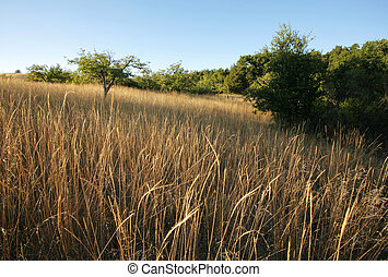 日没, カリフォルニア, 牧草地, chaparral
