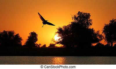 日没, シルエット, 鳥, 背景