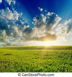 日没, 上に, よい, 緑のフィールド