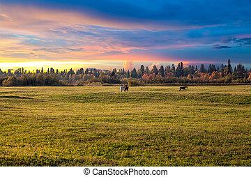 日没, 上に, ∥, 牧草地