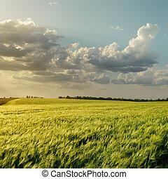 日没, 上に, 緑のフィールド