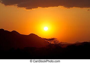 日没, 中に, アフリカ, ∥で∥, 陰, の, baobab の木