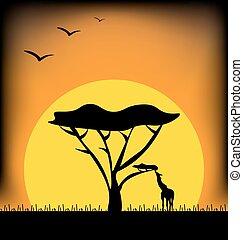 日没, 中に, アフリカ, イメージ