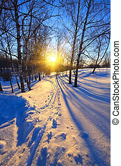 日没, 中に, a, 冬, 公園