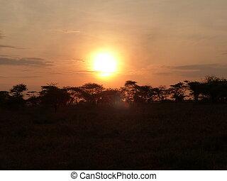 日没, 中に, serengeti