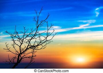日没, 木の景色