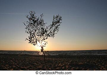 日没, 木, 孤独