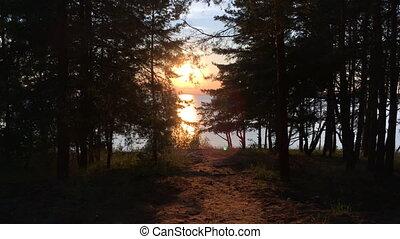 日没, 森林