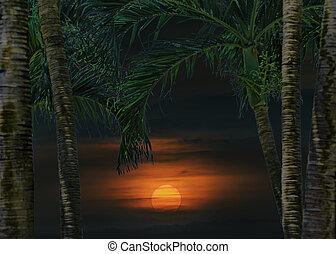 日没, 熱帯 景色, 現場