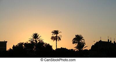 日没, 砂漠, 6