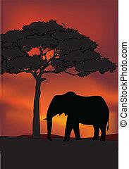 日没, 背景, アフリカ