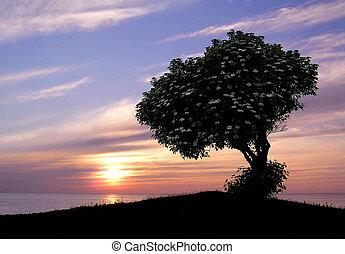 日没, 花, 木