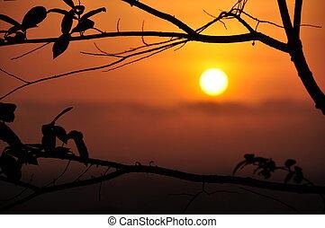 日没, 葉, シルエット
