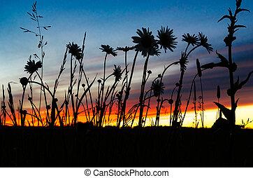 日没, 野生の花, シルエット