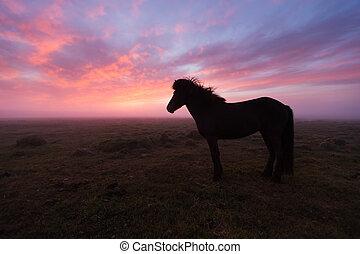 日没, 馬, グループ, アイスランド語, 美しい
