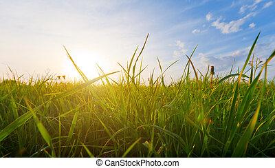 日落, 同时,, 草
