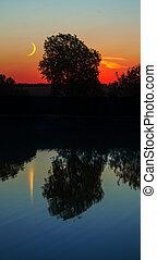 日落, 岸, 树, 湖