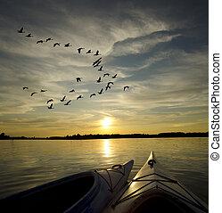 日落, kayaks, 鹅, 着陆