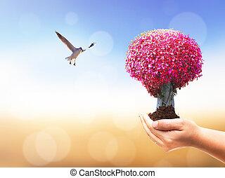 日, 手を持つ, 木, ぼやけた背景, concept:, インターナショナル, 平和, 赤, 大きい, 自然