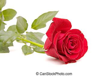 日, 隔離された, white., バレンタイン, 赤は 上がった