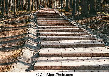 早く, 石, park., 森林, ゴール, 日, 階段, spring., 達成, 美しい, 概念, あなたの, 上昇