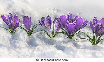 早く, spring.