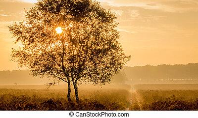 早晨太阳, 发光, 通过, a, 树, 在上, the, 荒野