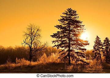 早晨太陽, 在, 冬天時間